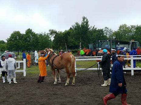 「第57回鹿追町競ばん馬競技大会」の中川郁子(ゆうこ)写真