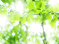 photo_hashira08