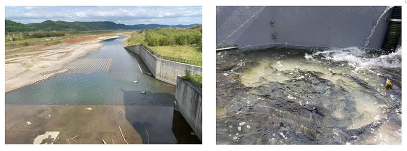 千代田堰堤の鮭の写真