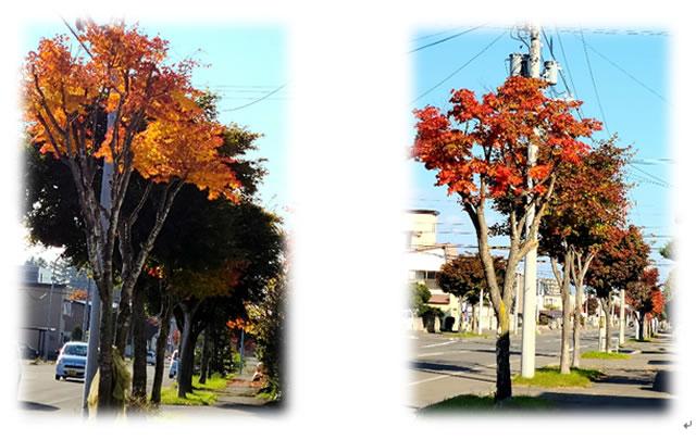 十勝の秋の紅葉