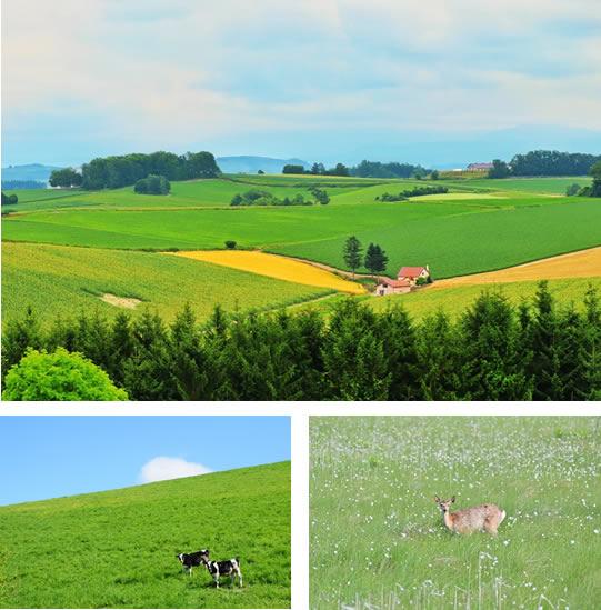 北海道の自然の風景